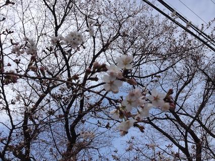 2014-0329-sakura