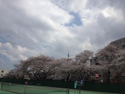 2014-0404-sakura