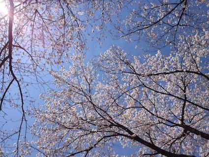 2014-0405-sakura