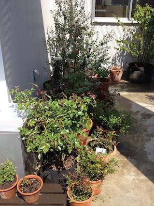 2014-0414-garden