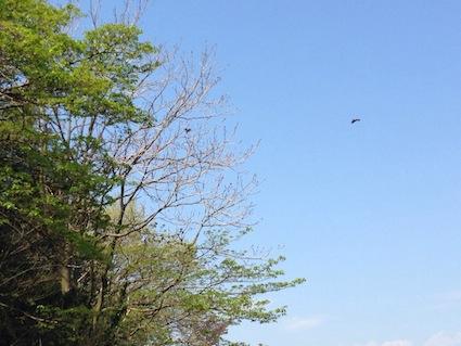 2014-0414-sanpo
