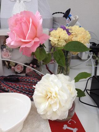2014-0507-rose