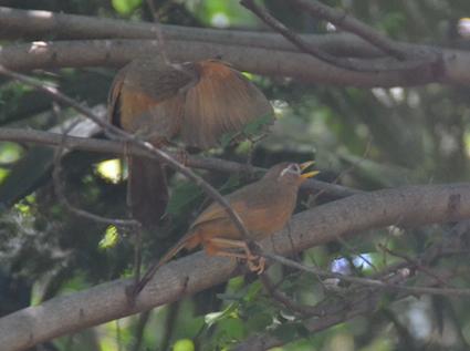 2014-0711-bird2