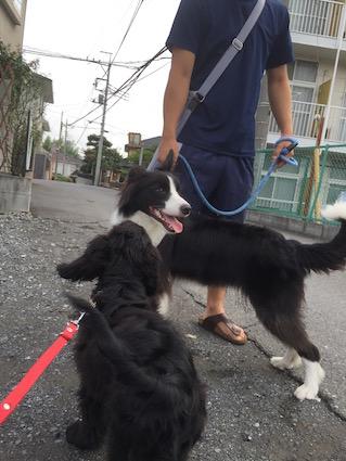 2016-0728-wan2